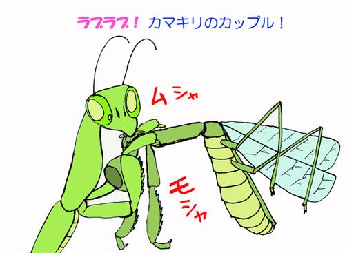 Kamakiri_25